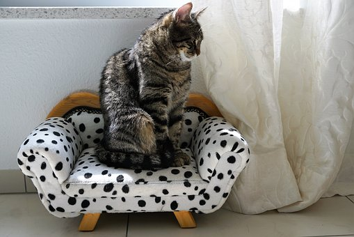 Cat sitting on a little sofa with spots after upholsterers in Glasgow repaired the damages.